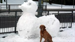 Dog with snow duck
