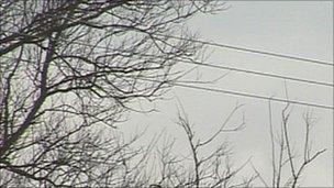 Trees near power lines