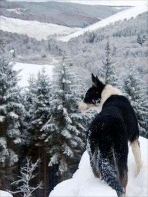 Dog looking at Yarrow valley