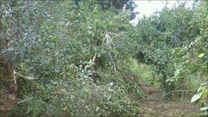 Jungle in Bhutan