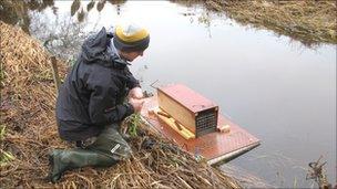 Volunteer checking mink raft