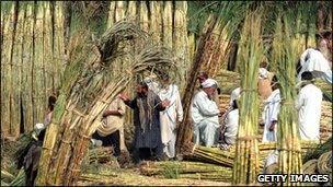 Traders sell sugar cane