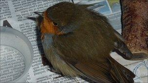 WRAS staff treat a sick bird