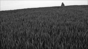 A field of rye grass (generic)