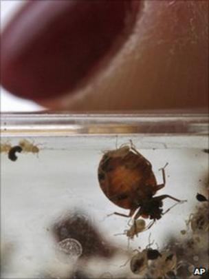 Bedbug rise a 'public health issue' for Scotland - BBC News