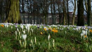 Flowers in Victoria Park, Glasgow
