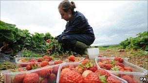 Fruit picker in Northumberland