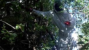 A Maasai honey harvester in protective gear