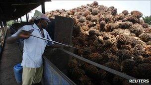 A worker loads oil palm fruits into a processor