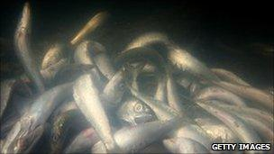 Sardines. File photo