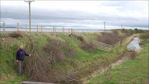 Destroyed hawthorn trees on Flintshire coastal path