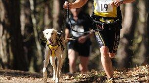 Runner with dog - generic