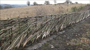 The hedge Burt Hunter Knitsley laid at Aykley Heads in County Durham