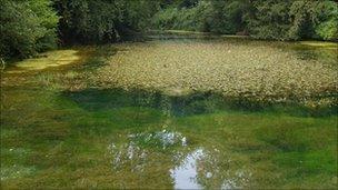 Crassula at Silent Pool (Leo Jennings SWT)