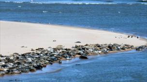 Seals along the Ythan Estuary