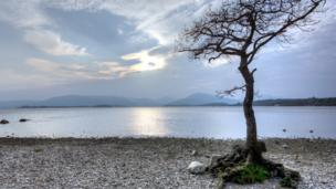 Tree by Loch Lomond