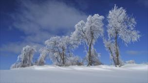 White branches and blue sky