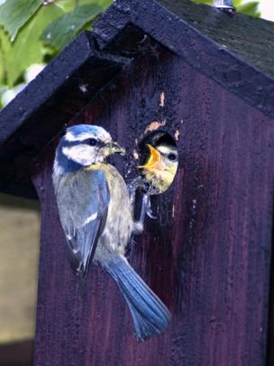 Bird feeding its young in a bird house