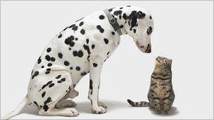 Dog looking at a cat