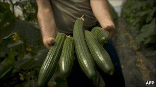 Spanish cucumbers, file pic