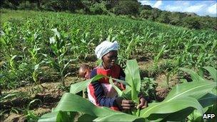 A worker on small-scale farm in Zimbabwe (archive shot)