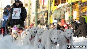 A dog sled team mushes down a street in the Alaskan capital, Anchorage