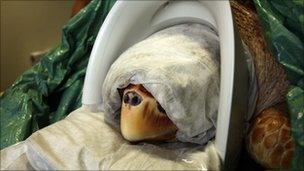 Snorkel the turtle