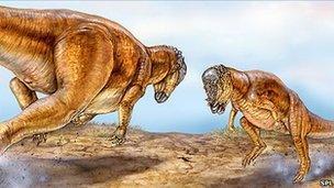 Head butting pachycephalosaurs (SPL)