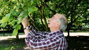 Peter McDonald, hazelnut farmer