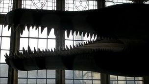 Model of Dorset pliosaur