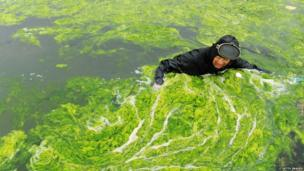 A man trying to clean up the algae in eastern China