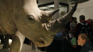 Model of a rhino at the National Museum of Scotland