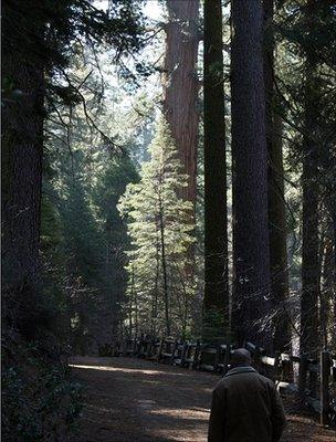 Forest path in Yosemite National Park, US (Image: BBC)
