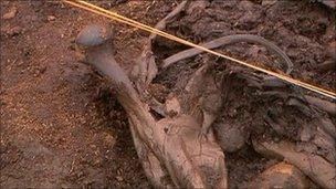 Part of a body found in a bog in Ireland