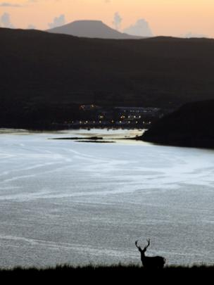 Stag at dusk with Portree in the background
