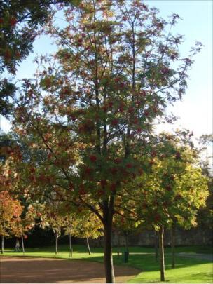 A tree in Princes Street Gardens in Edinburgh