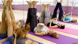 Dog yoga class