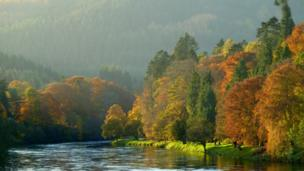 Trees on the banks of the River Tay in Dunkeld