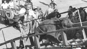 Wojtek being taken up a ship's gang plank. Photo courtesy of The Polish Institute and Sikorski Museum