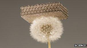 The metallic micro-lattice on a dandelion head