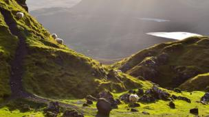 Sheep graze in the shadow of the Quiraing on the Trotternish Ridge