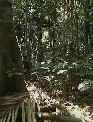 Africas rainforests more resilient to climate change bbc news rainforest image bbc sciox Image collections
