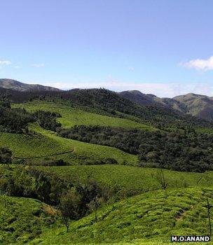 Fragmented forest landscape (Image: M O Anand)