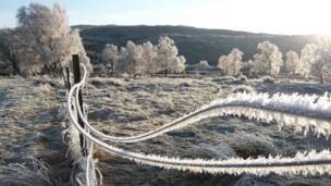 Trees and a wire fence covered in frost