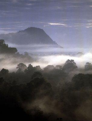 Tropical forest (Image: BBC)