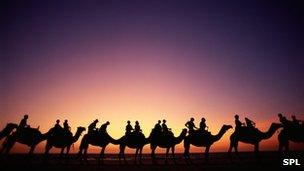 Camels ridden by tourists on beach in northern Australia