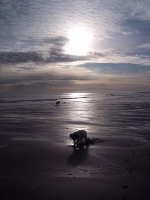 Dogs on Arbroath beach