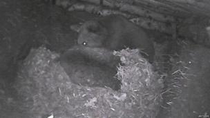 Picture taken from den webcam