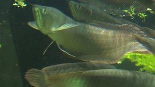 Fish in London Zoo aquarium