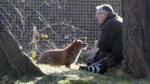 Man and fox